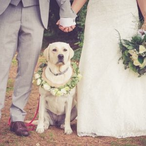 Dog collar of flowers